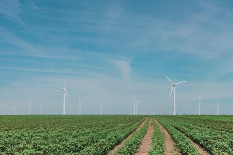 Wind turbines in a field on a sunny day